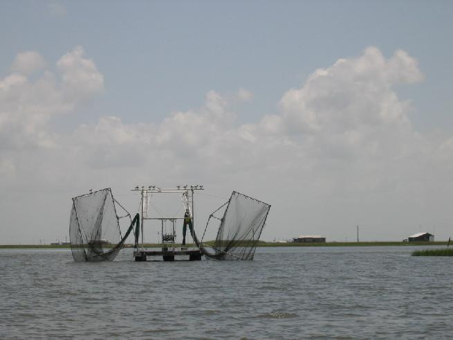 Paupiere Shrimp Net