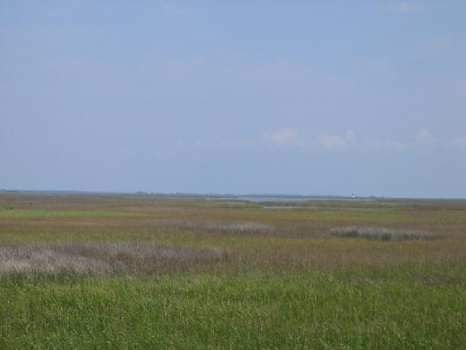 Marsh In Cocodrie